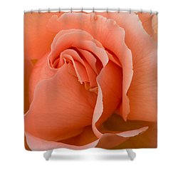 Romantic Orange Rose  Shower Curtain