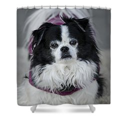Romeo  Shower Curtain by Saija  Lehtonen