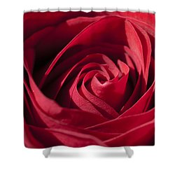 Rose Red Shower Curtain by Tara Lynn