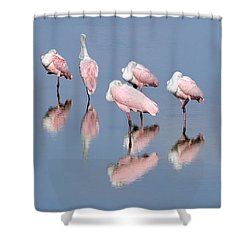 Roseate Spoonbills And Reflections Shower Curtain by Bradford Martin