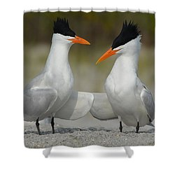 Royal Terns Shower Curtain by James Petersen