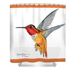 Da144 Rufous Hummingbird By Daniel Adams Shower Curtain