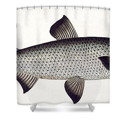 Salmon Shower Curtain by Andreas Ludwig Kruger