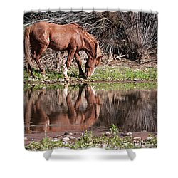 Salt River Wild Horse Shower Curtain by Tam Ryan
