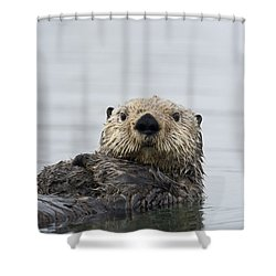 Shower Curtain featuring the photograph Sea Otter Alaska by Michael Quinton