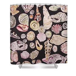 Shells By C . 1.3 Shower Curtain