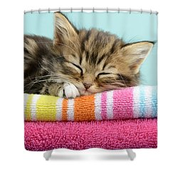 Sleepy Kitten Shower Curtain by Greg Cuddiford