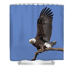 Smooth Landing 3 Shower Curtain by David Lester