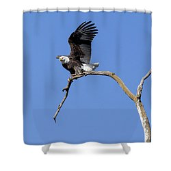 Smooth Landing 4 Shower Curtain by David Lester