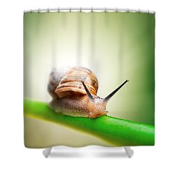 Snail On Green Stem Shower Curtain
