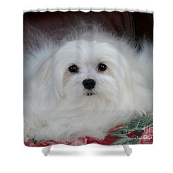 Snowdrop The Maltese Shower Curtain