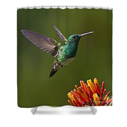 Snowy-bellied Hummingbird Shower Curtain by Heiko Koehrer-Wagner