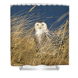Snowy Owl In The Dunes Shower Curtain by John Vose