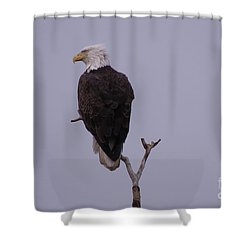Solo  Bald Eagle Shower Curtain by Mary Mikawoz