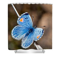 Sonoran Blue Shower Curtain by Jim Thompson
