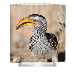 Southern Yellow-billed Hornbill Shower Curtain