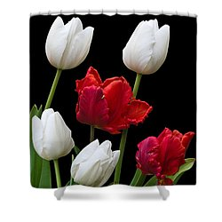 Spring Tulips Shower Curtain by Jane McIlroy