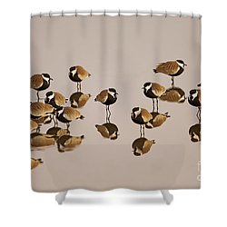 Spur-winged Lapwing Vanellus Spinosus Shower Curtain by Eyal Bartov