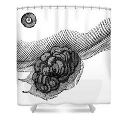 St. Martins Fistula Shower Curtain by Granger
