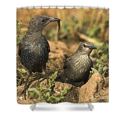 Starling Estornino Shower Curtain by Guido Montanes Castillo