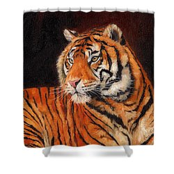 Sumatran Tiger  Shower Curtain by David Stribbling