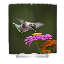 Summer Breeze Shower Curtain by Christina Rollo