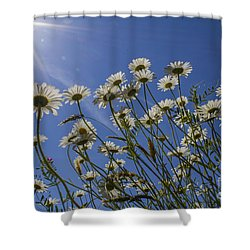 Sun Lit Daisies Shower Curtain by Brian Roscorla