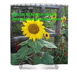Sunflower Shower Curtain by Eric  Schiabor