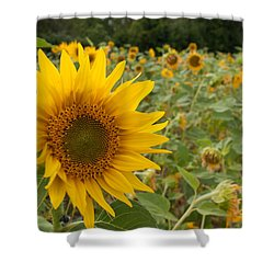 Sun Flower Fields Shower Curtain