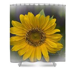 Sunflower Vr. 'dwarf Sunspot ' Shower Curtain