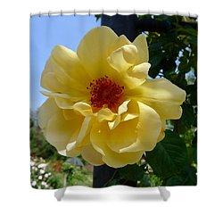 Sunny Yellow Rose Shower Curtain
