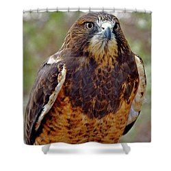 Swainson's Hawk Shower Curtain
