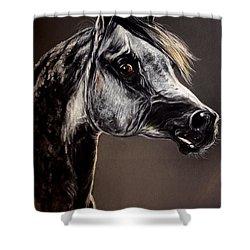 The Arabian Horse Shower Curtain by Angel  Tarantella