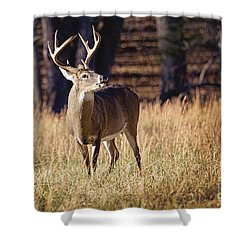 The Buck Shower Curtain by Laurinda Bowling