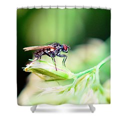 The Fly Shower Curtain by Tommytechno Sweden