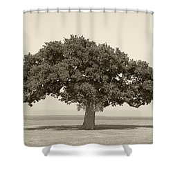 The Lonely Tree Shower Curtain by Charles Beeler