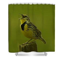 The Meadowlark Sings Shower Curtain by Jeff Swan