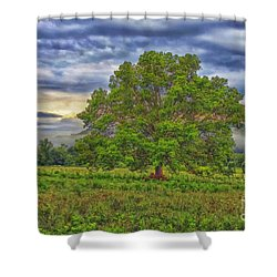 Shower Curtain featuring the photograph The Tree by Geraldine DeBoer