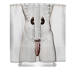Three Dimensional Medical Illustration Shower Curtain by Stocktrek Images