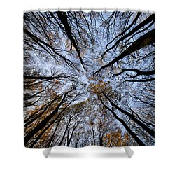 Tall Trees Shower Curtain by Mike Santis
