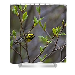 Townsends Warbler Shower Curtain by Doug Lloyd