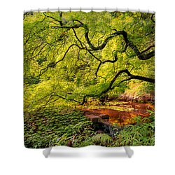 Tranquil Shade Shower Curtain