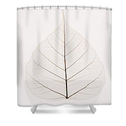 Transparent Leaf Shower Curtain by Kelly Redinger