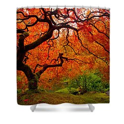 Tree Fire Shower Curtain by Darren  White