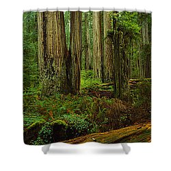 Trees In A Forest, Hoh Rainforest Shower Curtain