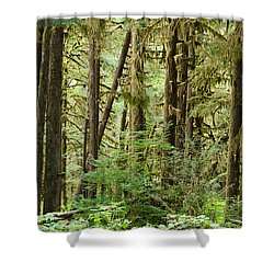 Trees In A Forest, Quinault Rainforest Shower Curtain by Panoramic Images