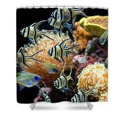 Tropical Wonderland - Banggai Cardinalfish Shower Curtain by Jamie Pham