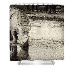 Two White Rhinos  Shower Curtain