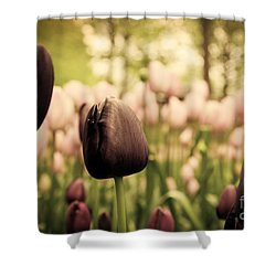 Unique Black Tulip Flowers In Green Grass Shower Curtain by Michal Bednarek