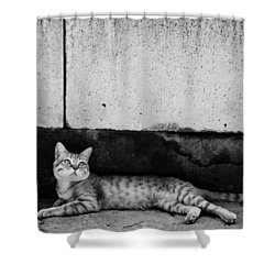 Shower Curtain featuring the photograph Untitled by Laura Melis